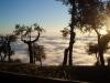 alberi-e-nebbia