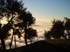 nebbia-in-valdinievole